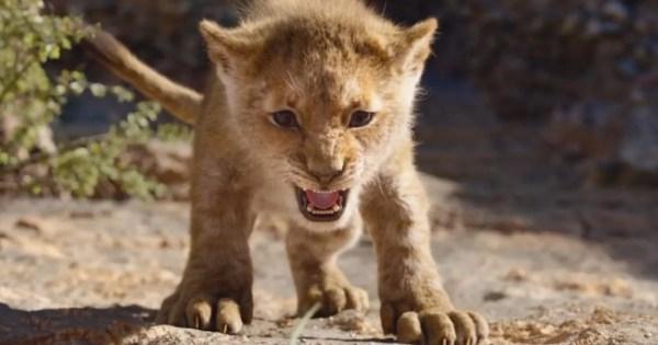 lion king # 30