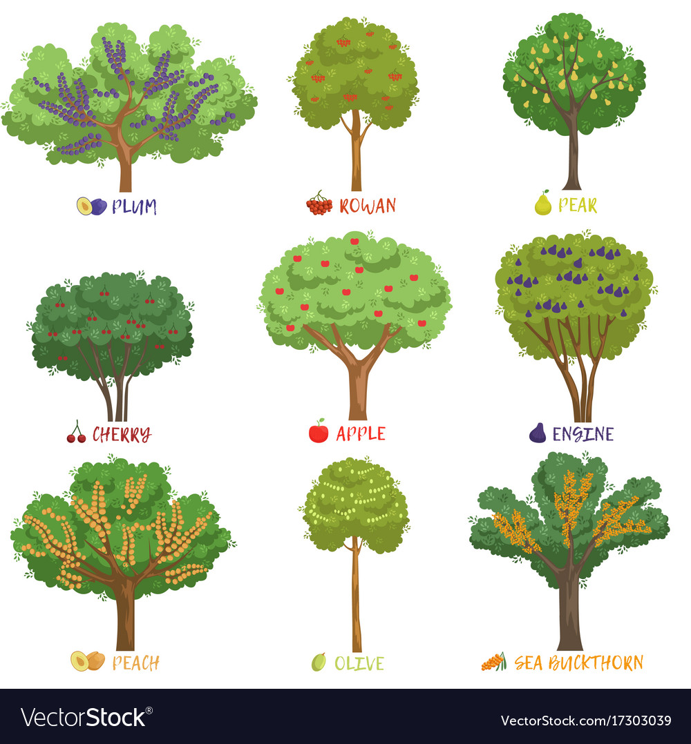 Different fruit trees sorts with names set garden Vector Image