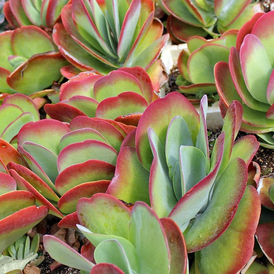Miniature Succulents Sale