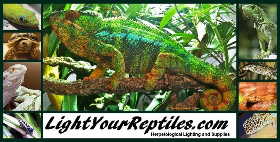 Reptile Uv Light Bulb