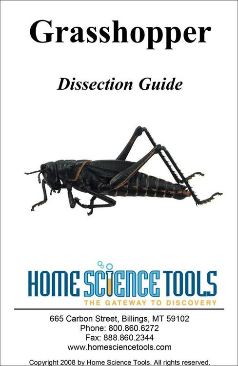 grasshopper internal dissection - 488×750