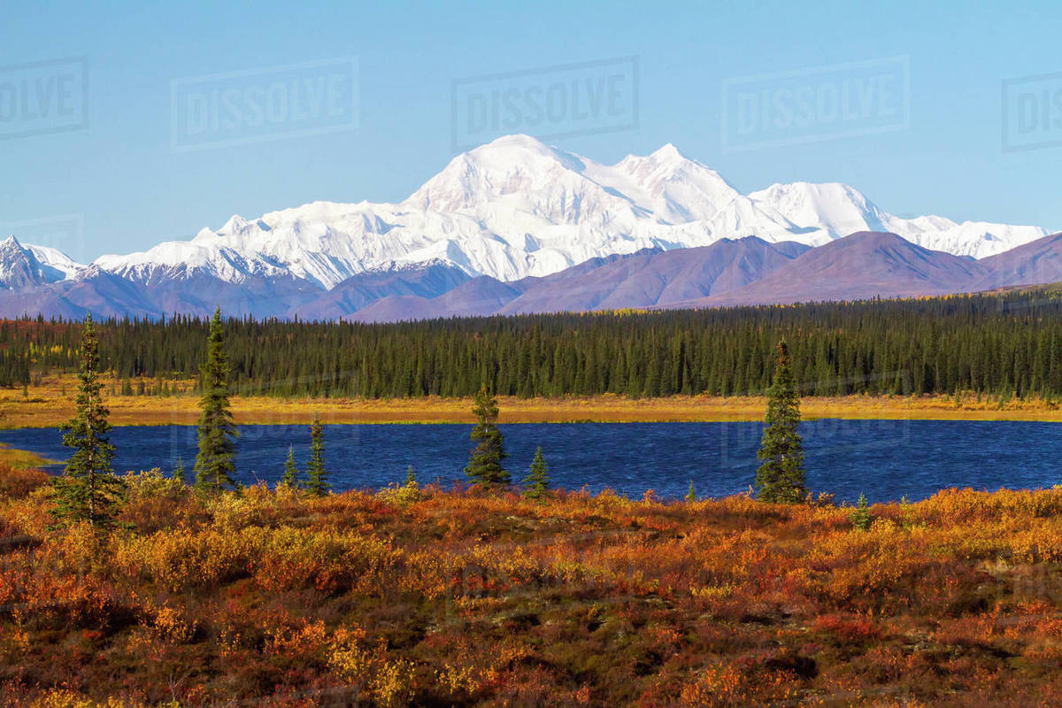 View Of Denali From The Parks Hwy  South Of Cantwell  Alaska     View Of Denali From The Parks Hwy  South Of Cantwell  Alaska  September  Interior  Alaska