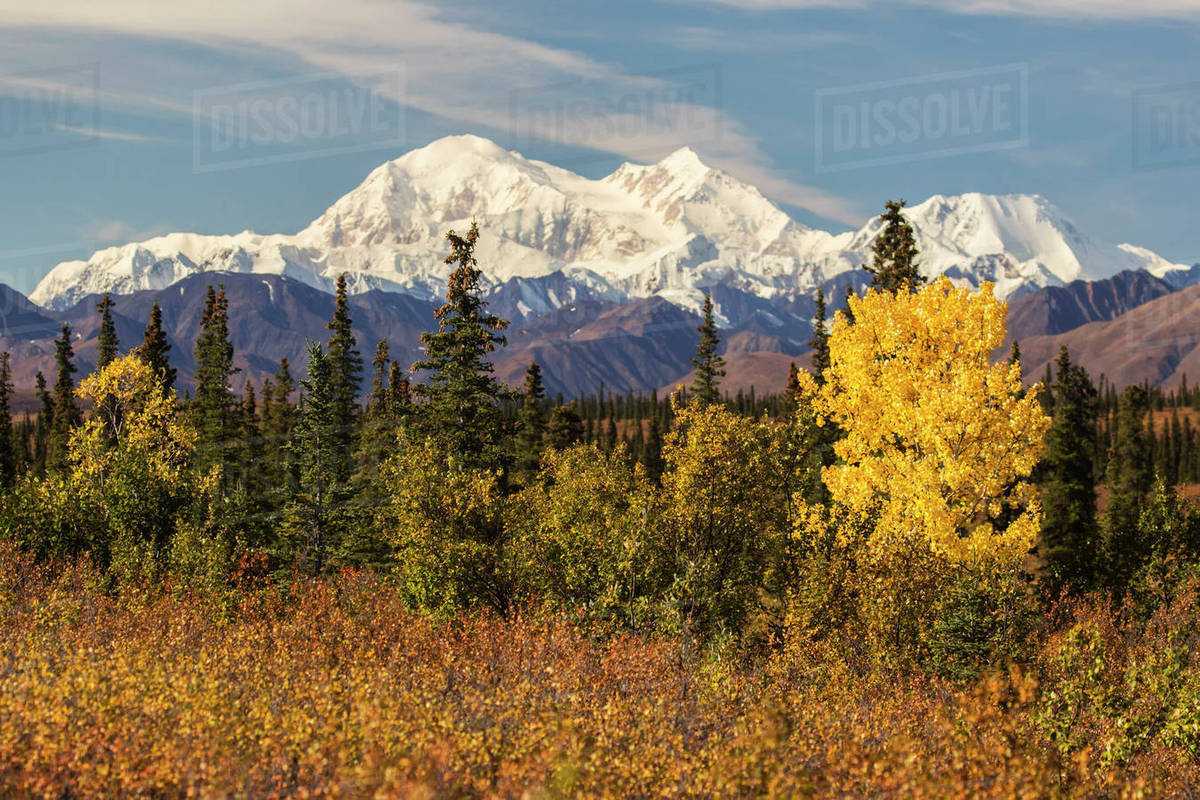 Denali  viewed from south of Cantwell  from the Parks Highway in     Denali  viewed from south of Cantwell  from the Parks Highway in Interior  Alaska  Alaska  United States of America