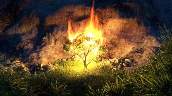 burning bush # 68