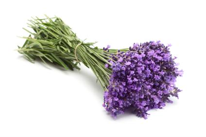 Uses of Lavender Flowers