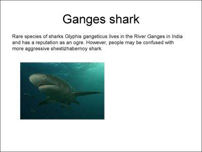 Endangered species - презентация онлайн