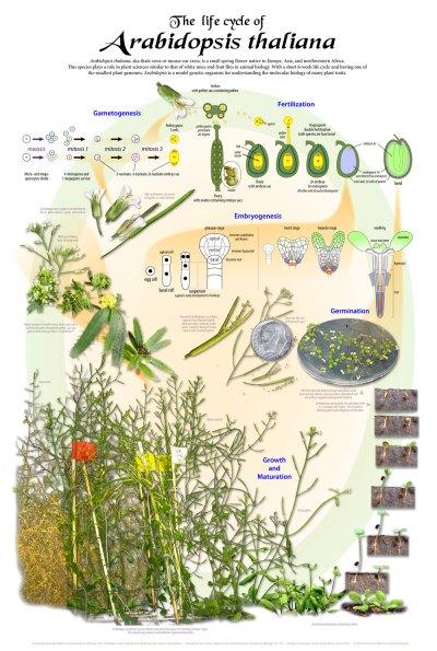 UW Botany Store | University of Wisconsin-Madison