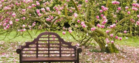 A Dozen of the Easiest Flowering Trees to Grow   DoItYourself com Many people use flowering trees as focal points in their yard s landscape  Flowering  trees may be evergreen or deciduous and many have fragrant blossoms