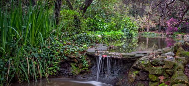 Backyard Ponds Do It Yourself