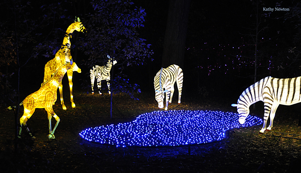 Cincinnati Hours Zoo Lights