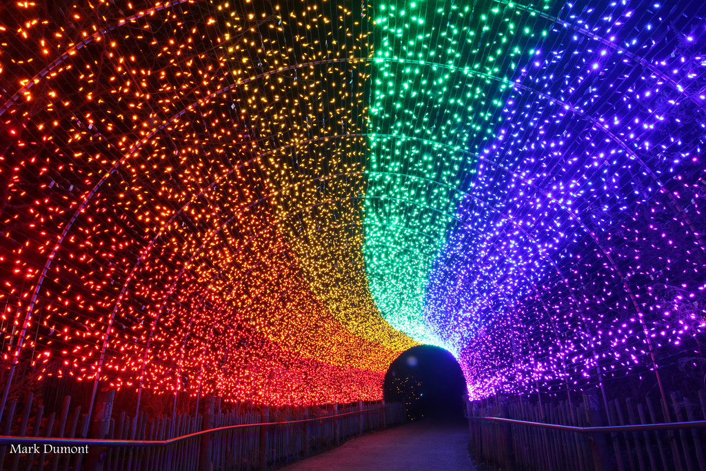 Festival Led Lights