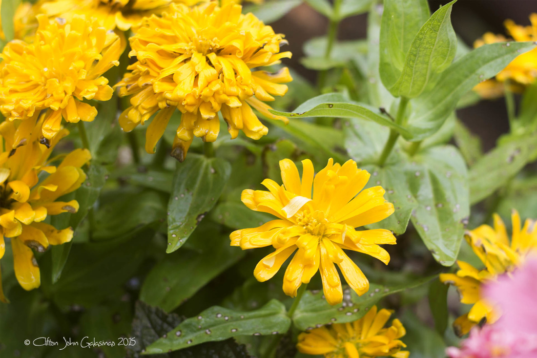 Different Flowers Names Philippines Their And Kinds