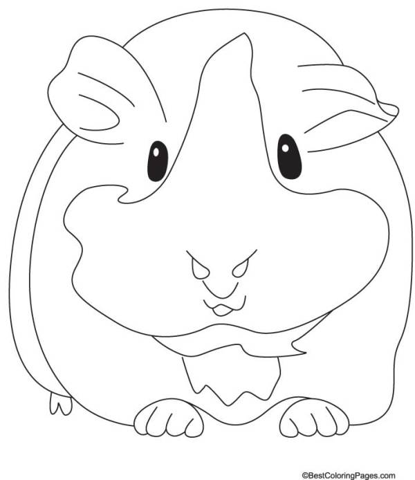 guinea pig coloring page # 25