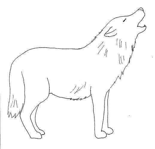 Simple Ways Draw Realistic Wolves