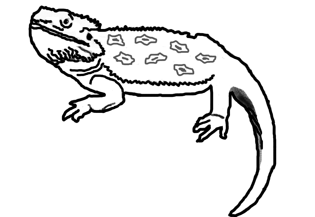 Free Cartoon Bearded Dragon, Download Free Clip Art, Free ...