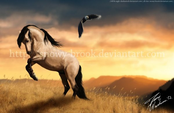 paint spirit stallion of the cimarron # 41