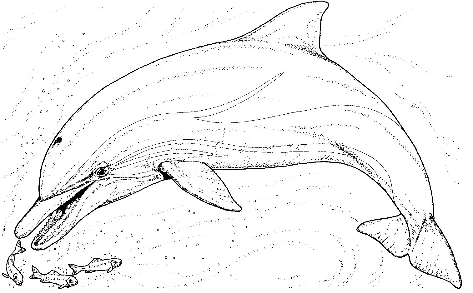 Dolphin Coloring Pages Printable Dolphin Tale Colouring Pages