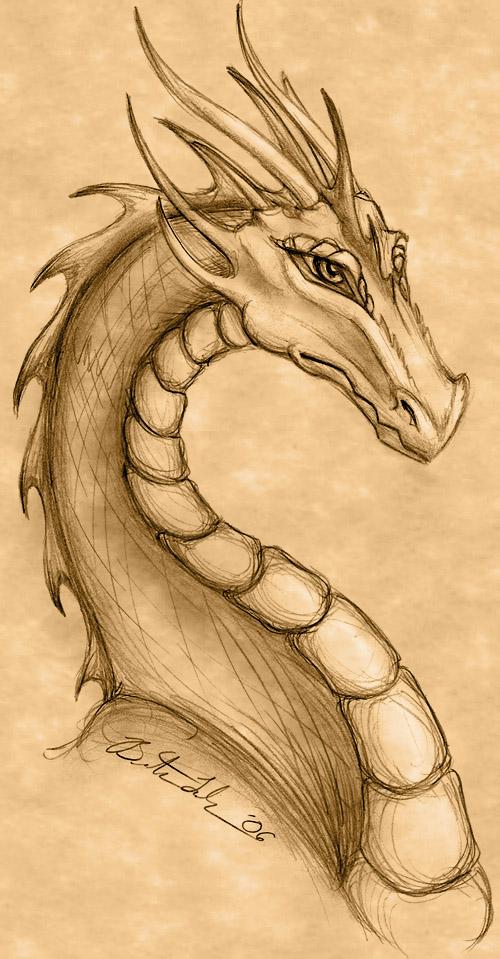 Deviantart Dragon Drawings Head Sketches