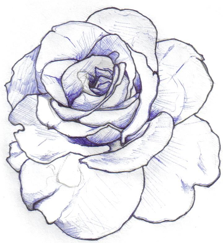 Free Rose Drawing Outline, Download Free Clip Art, Free ...