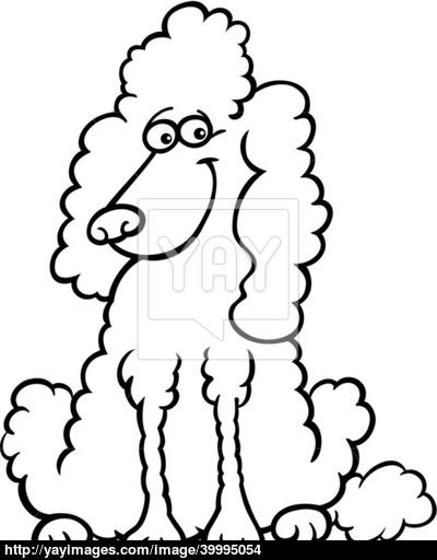 Bichon Outline Drawing Frise