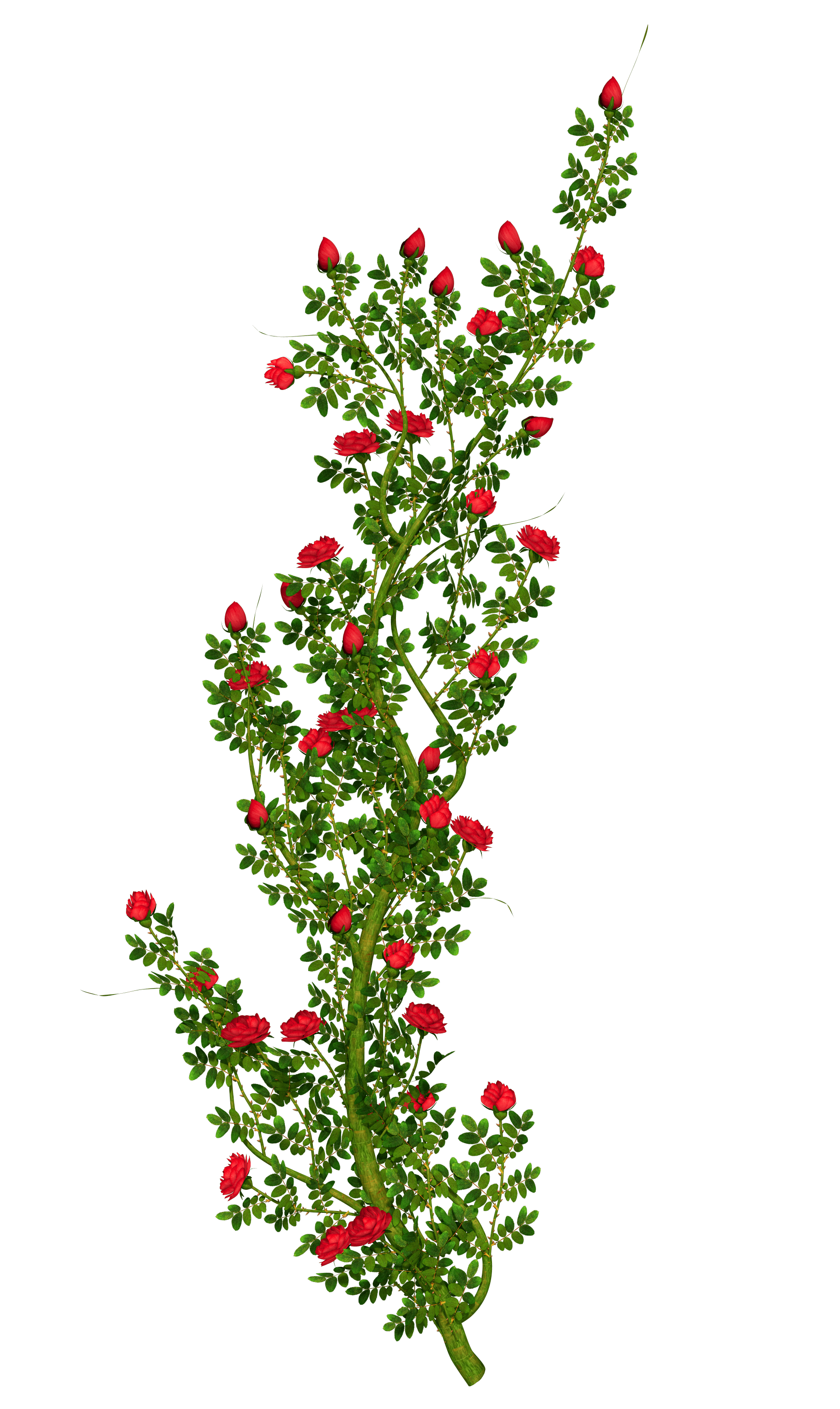 Field Wild Roses Red