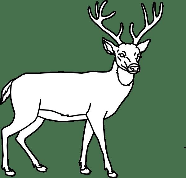 Buck Deer Outline