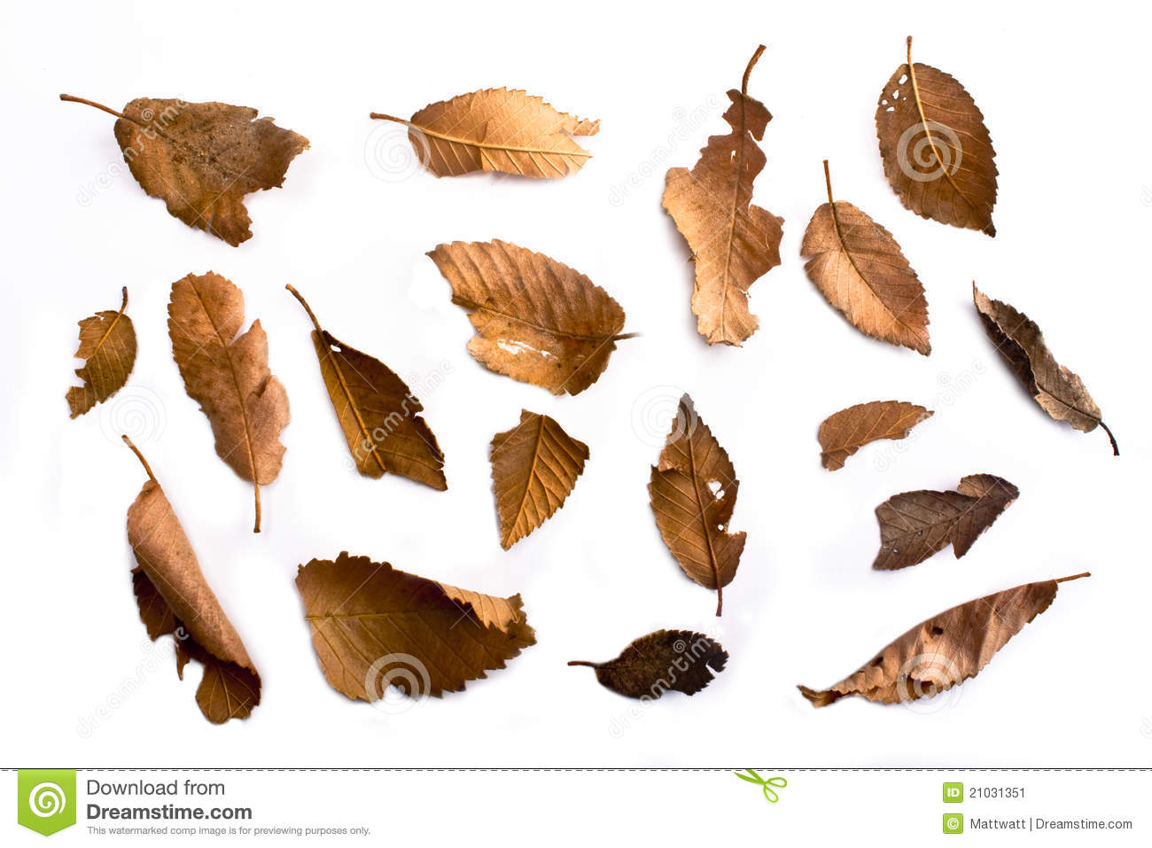 Dry Leaves Clipart 20 Free Cliparts Download Images On