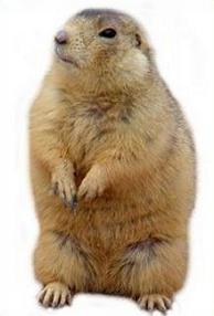 Prairie Dog Clipart Clipground