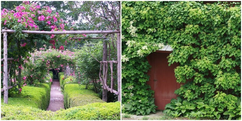 Best Garden Design Program
