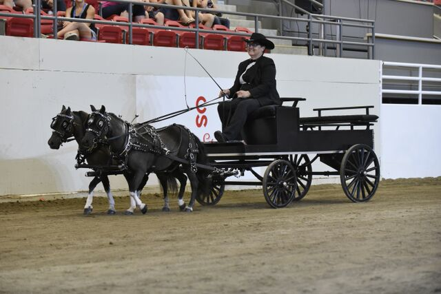 Gale Takes Lord Sterling Cup In Miniature Horse Show