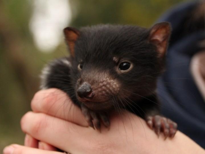 野生动物及动物园,自然及野生动物,维多利亚州,澳大利亚