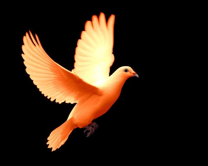 Orange Dove Colored Creatures