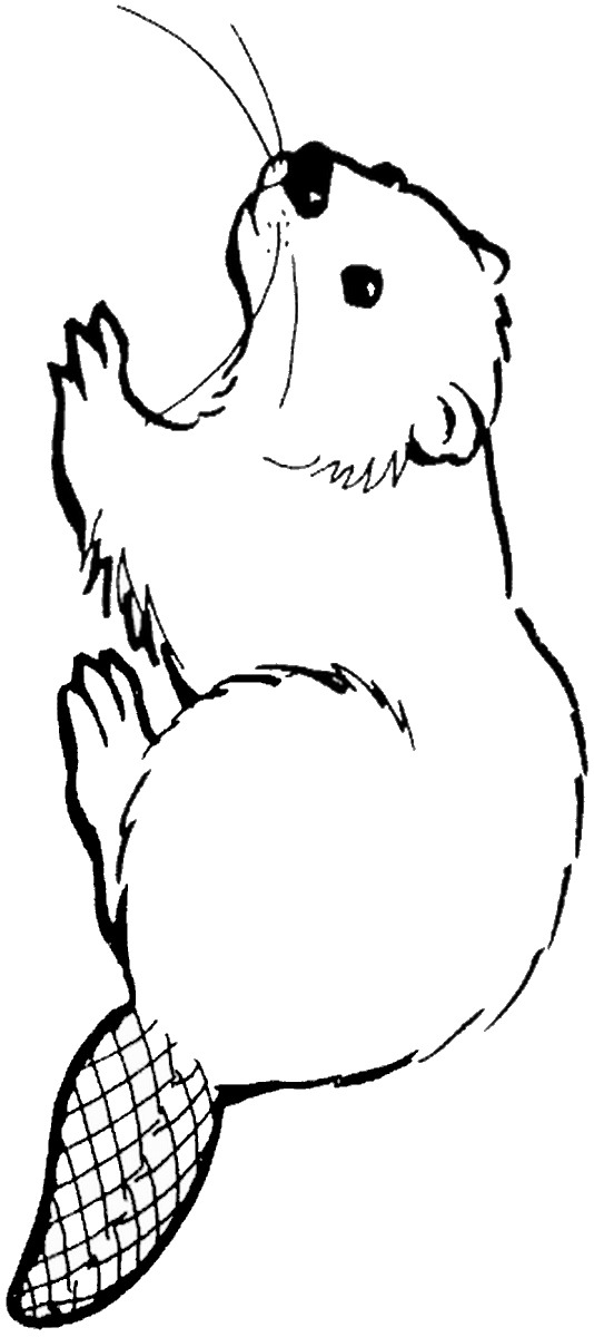 Beaver coloring pages, fun coloring pages