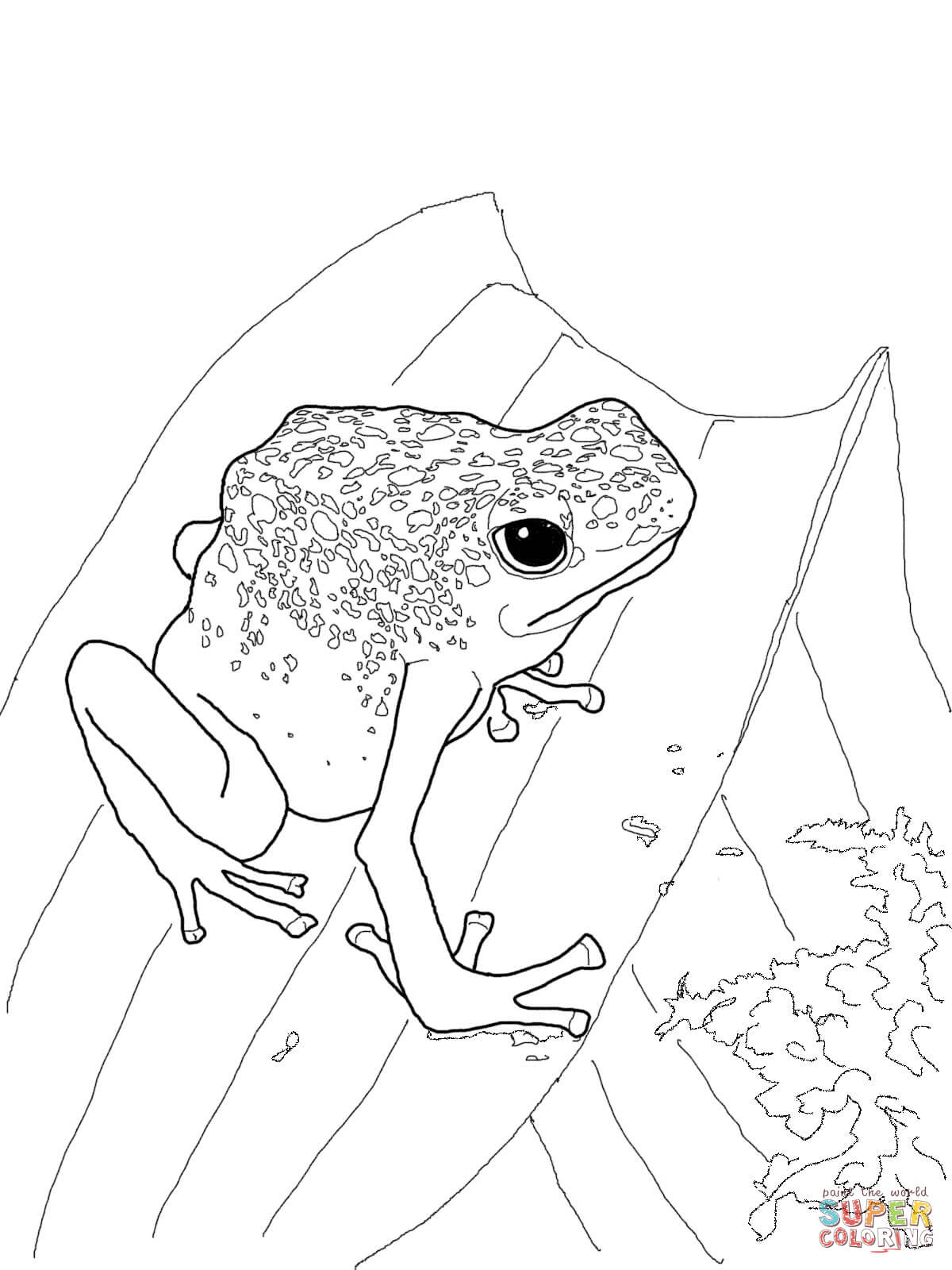 Poison dart frog coloring page coloring home, fun coloring pages