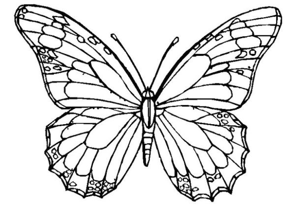 butterfly coloring pages for adults # 15