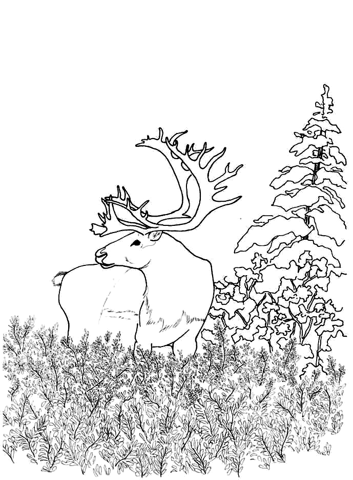 Woodland Animals Coloring Pages - Coloring Home