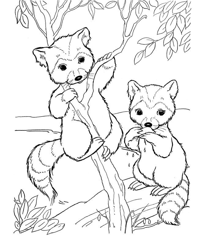 Woodland Creatures Coloring Pages - Coloring Home