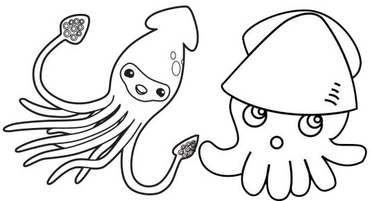 squid coloring page preschool # 54