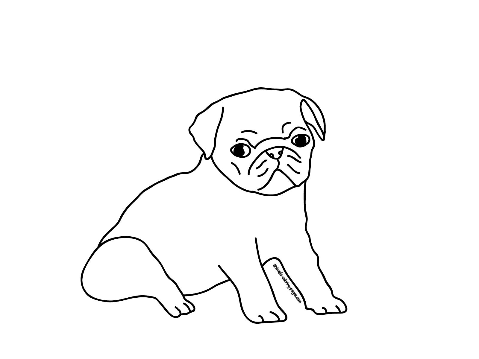 Color Cartoon Pugs Baby Cute