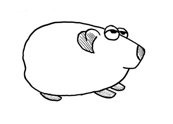 guinea pig coloring page # 73