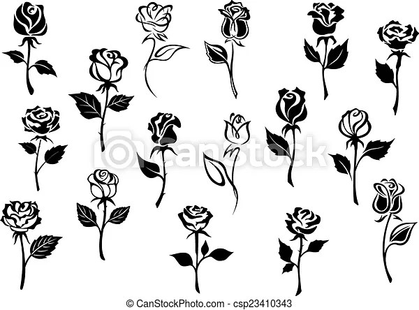 Black and white roses flowers  Black and white elegance roses     Black and white roses flowers   csp23410343