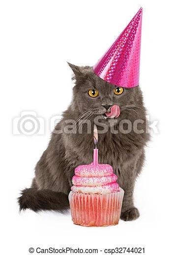 Happy Birthday Party Cat With Pink Cupcake Funny Photo Of