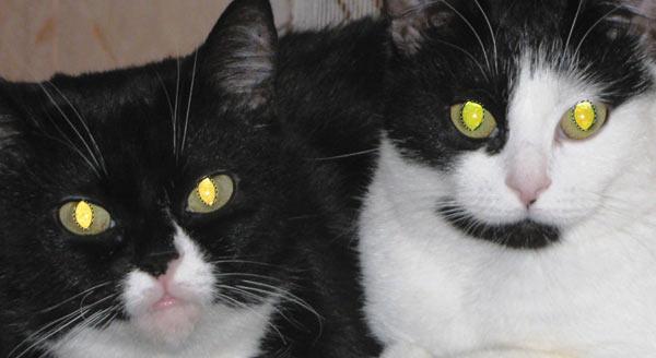 Ένα παράδειγμα εικόνων των γατών με πολύ φωτεινά κίτρινους μαθητές δίνεται.