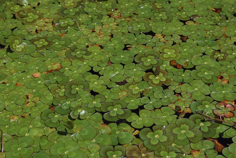 Pond Design Examples