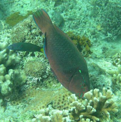 Weed-eating fish 'help protect jobs, livelihoods ...
