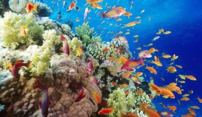 Great Barrier Reef risks losing tolerance to bleaching ...
