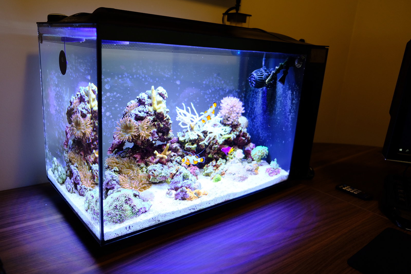 Best Reef Led Lighting