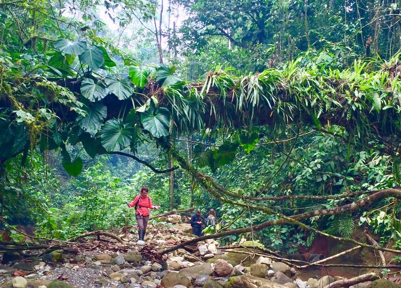 amazon rainforest location - 736×528