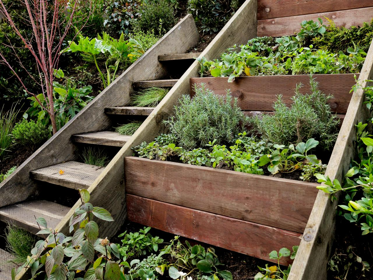 Small Vegetable Garden Box