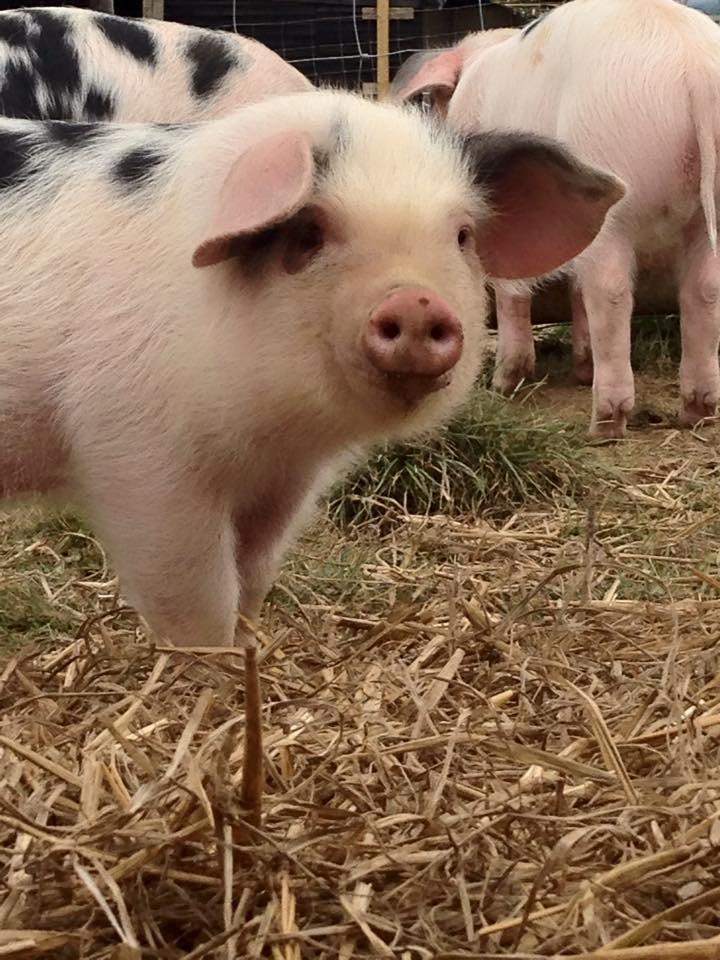 Farm Fresh Sales Week